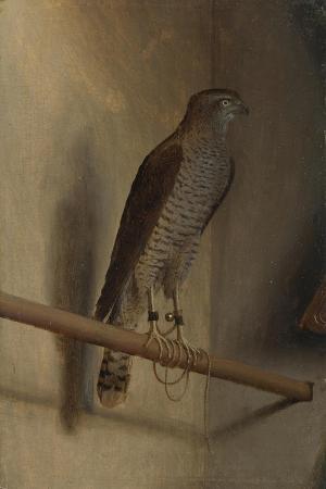 jacopo-de-barbari-a-sparrowhawk-1510s