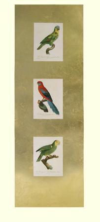 jacques-barraband-parrot-panel-ii