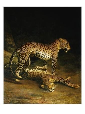 jacques-laurent-agasse-two-leopards-lying-in-the-exeter