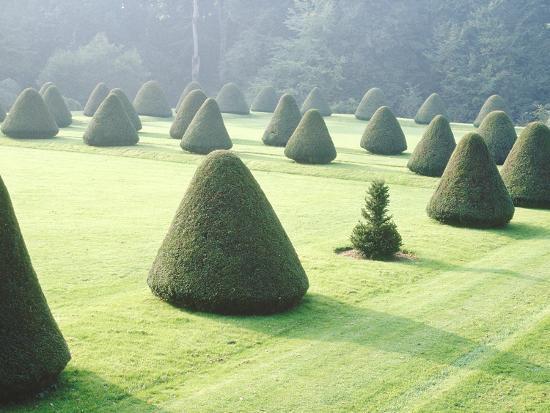jacqui-hurst-yew-topiary-parnham-house-dorset