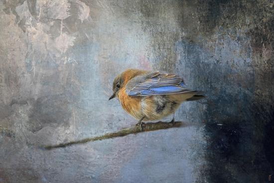 jai-johnson-bluebird-in-winter