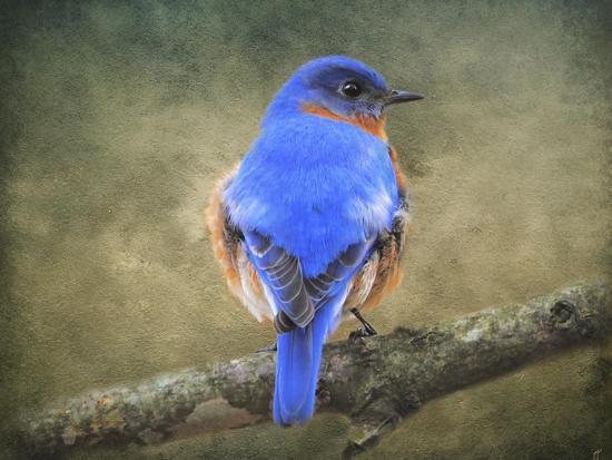 jai-johnson-bluebird-portrait