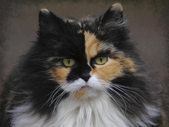 jai-johnson-calico-cat-portrait