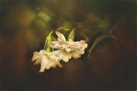 jai-johnson-gardenia-in-the-garden