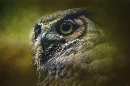 jai-johnson-great-horned-owl-in-the-grove