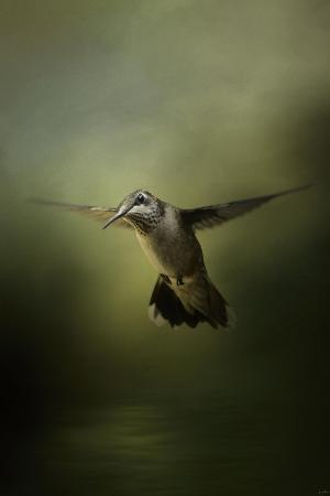 jai-johnson-hummingbird-over-water