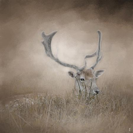 jai-johnson-in-plain-sight-sika-deer