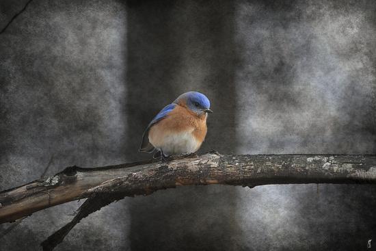 jai-johnson-last-day-home-bluebird
