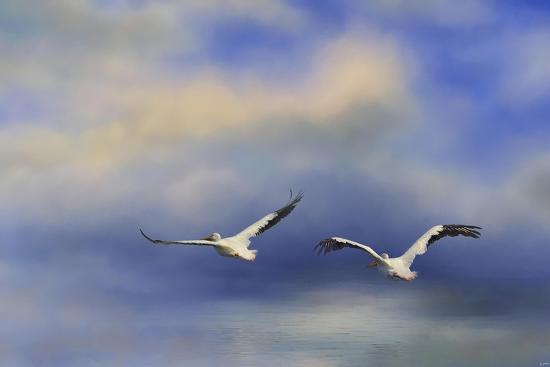 jai-johnson-pelicans-at-sea