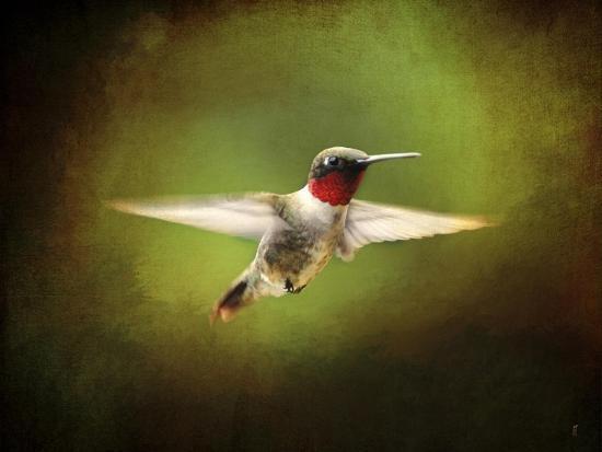 jai-johnson-portrait-of-a-hummingbird-in-flight