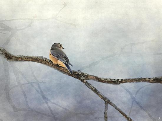 jai-johnson-solitude-bluebird