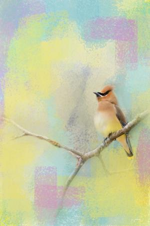jai-johnson-song-of-the-waxwing