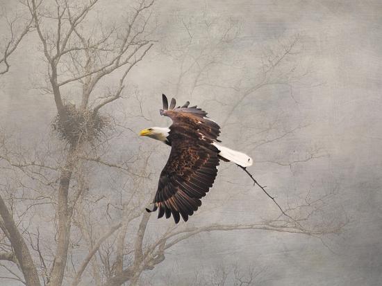 jai-johnson-starting-over-bald-eagle