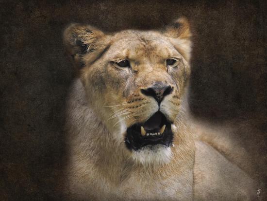 jai-johnson-the-lioness-portrait