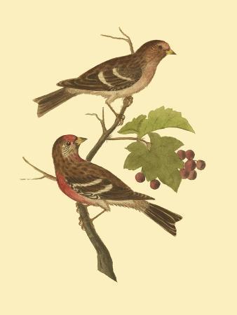 james-bolton-antique-bird-pair-ii