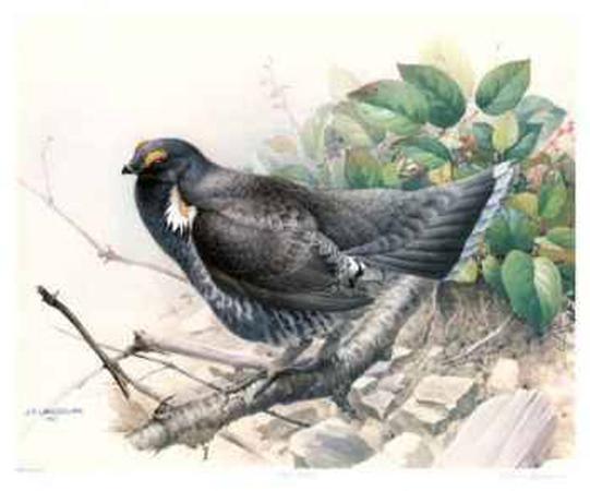 james-fenwick-lansdowne-blue-grouse