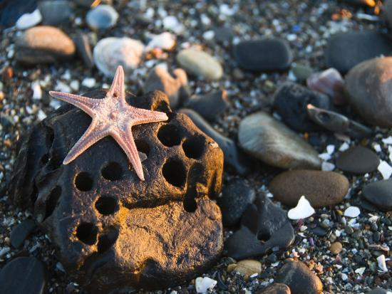 james-forte-underneath-side-of-a-sea-star-washed-up-on-a-rocky-beach