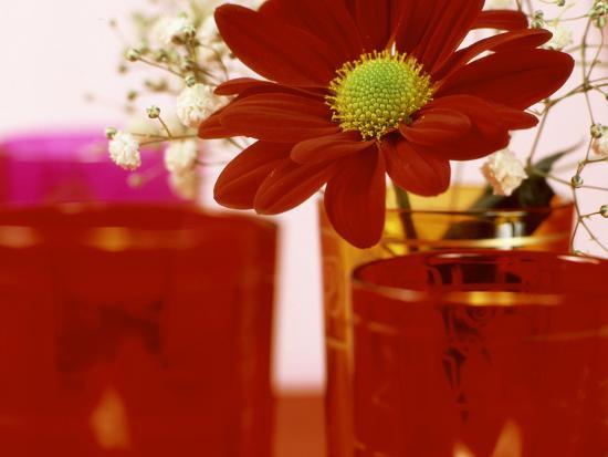 james-guilliam-single-red-crysanthemum-in-glass-vase-surrounded-by-ornamental-tea-lights