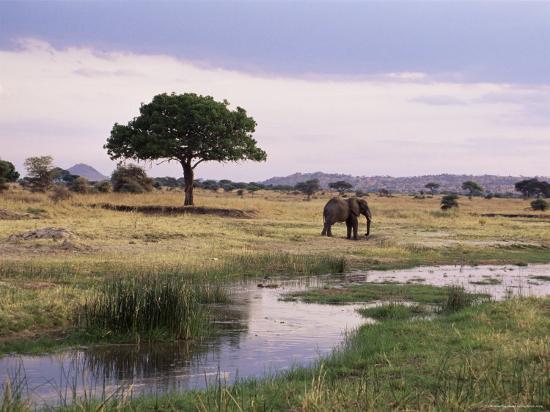 james-hager-african-elephant-loxodonta-africana-tarangire-national-park-tanzania-east-africa-africa