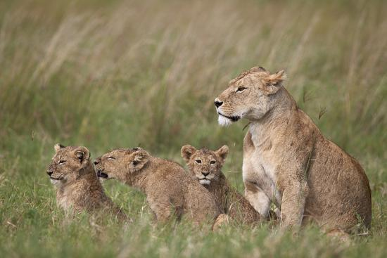 james-hager-lion-panthera-leo-female-and-three-cubs-ngorongoro-crater-tanzania-east-africa-africa