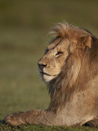 james-hager-lion-panthera-leo-ngorongoro-conservation-area-serengeti-tanzania-east-africa-africa