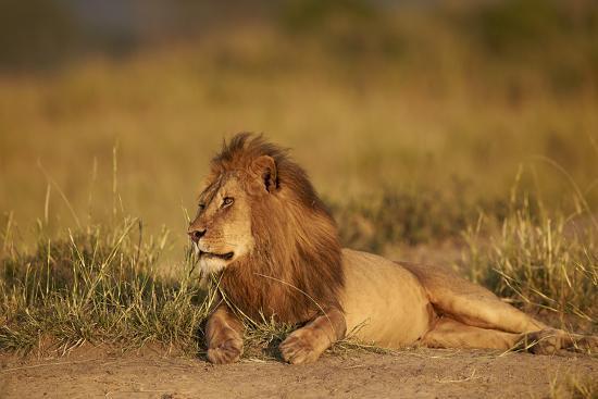 james-hager-lion-panthera-leo-serengeti-national-park-tanzania-east-africa-africa