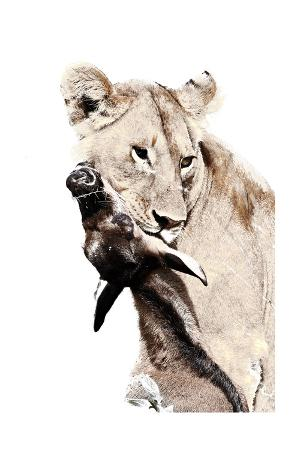 james-hager-the-kill-a-lioness-with-a-blue-wildebeest-calf-serengeti-national-park-east-africa