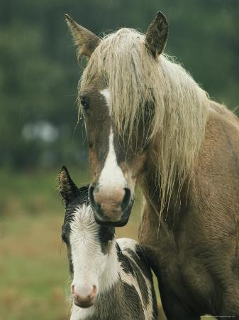 james-l-stanfield-portrait-of-a-wild-pony-and-her-foal