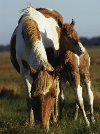 james-l-stanfield-wild-pony-and-foal-grazing-in-a-field