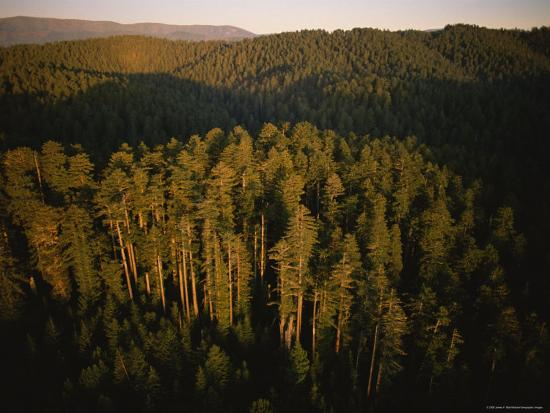 james-p-blair-afternoon-sunlight-bathes-redwood-trees-california