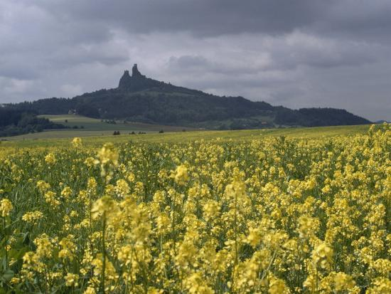 james-p-blair-view-across-field-of-flowering-mustard-to-the-ruins-of-trosky-castle-czechoslovakia