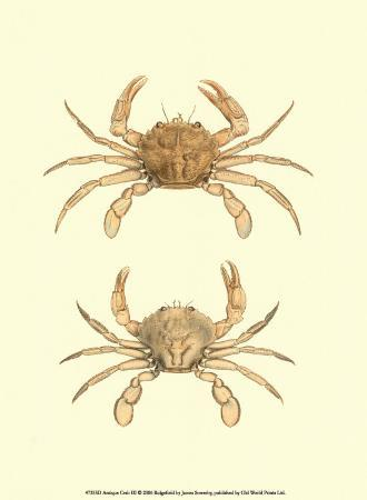 james-sowerby-antique-crab-iii