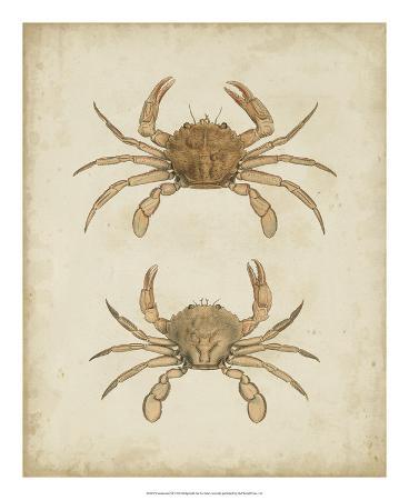 james-sowerby-crustaceans-vi