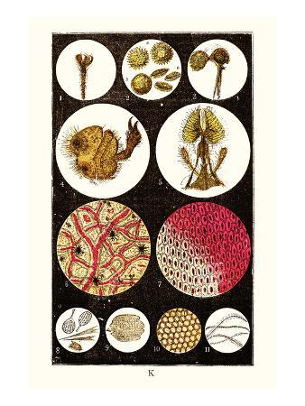 james-sowerby-microscopic-views-of-plants-and-beetles
