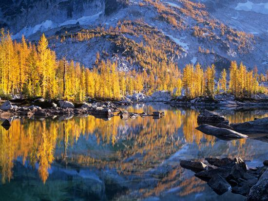 jamie-judy-wild-golden-larch-trees-reflected-in-leprechaun-lake-enchantment-lakes-alpine-lakes-wilderness