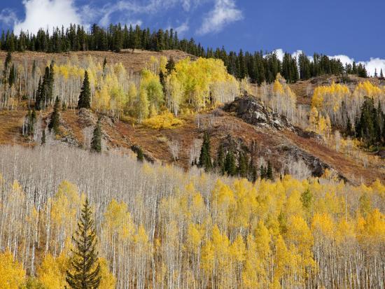 jamie-judy-wild-gunnison-national-forest-colorado-usa
