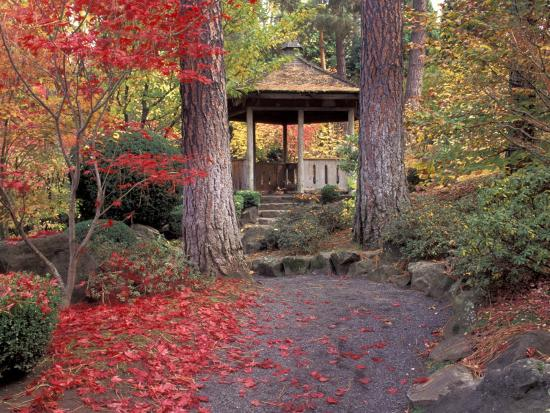 jamie-judy-wild-japanese-gazebo-with-fall-colors-spokane-washington-usa