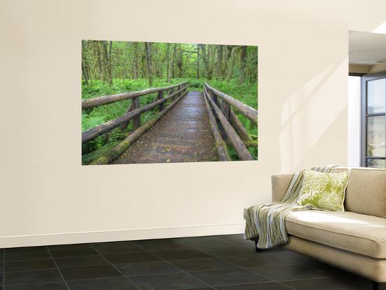 jamie-judy-wild-maple-glade-trail-wooden-bridge-quinault-rain-forest-olympic-national-park-washington-usa