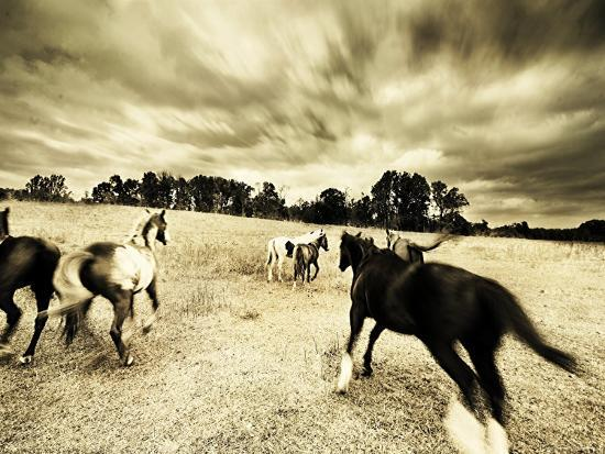 jan-lakey-horses-running-and-playing-in-barren-field