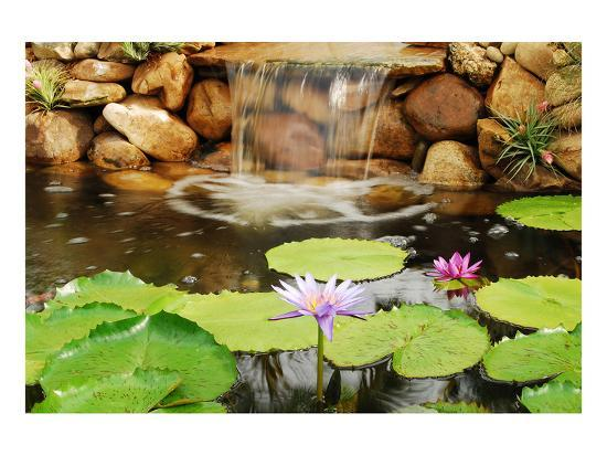 jan-michael-ringlever-lilly-pond