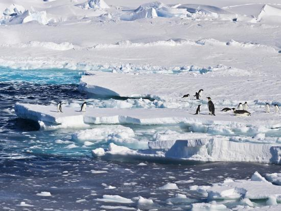 janet-muir-antarctica-emperor-and-adelie-penguins-on-the-edge-of-an-ice-shelf