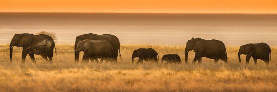 janet-muir-etosha-np-namibia-africa-elephants-walk-in-a-line-at-sunset