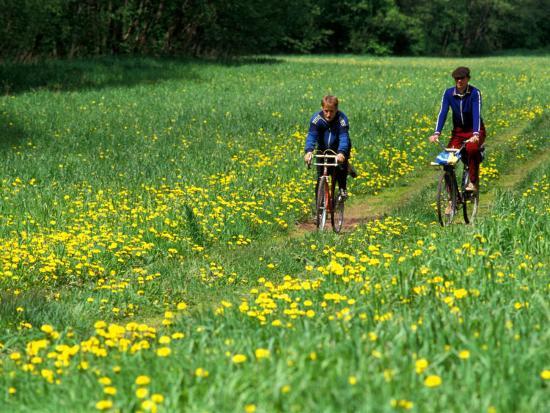 janis-miglavs-bicyclists-ride-through-field-of-dandelions-gauja-river-gauja-national-park-latvia
