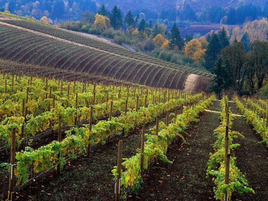 janis-miglavs-vineyard-in-the-willamette-valley-oregon-usa