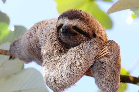 janossy-gergely-happy-sloth-hanging-on-the-tree