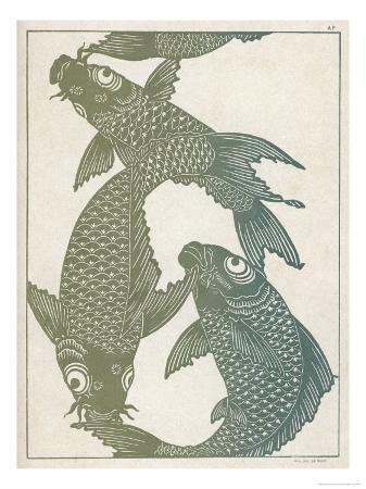 japanese-carp-twisting-turning-and-twining-with-wonderful-ease