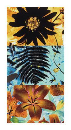jaquiel-petals-and-leaves-ii