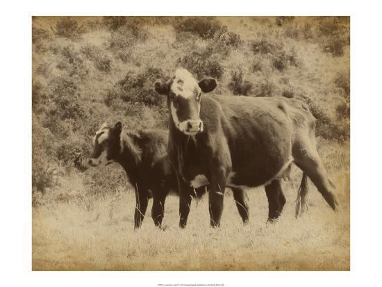 jarman-fagalde-lone-star-cows-ii