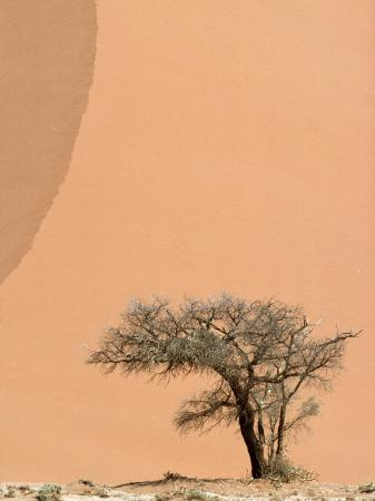jason-edwards-acacia-tree-dwarfed-by-an-immense-sand-dune-at-sunset