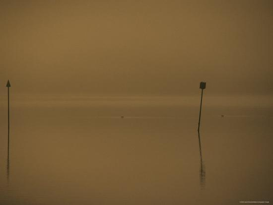 jason-edwards-eurasion-coots-and-channel-markers-emerge-from-the-haze-of-a-dawn-fog-australia
